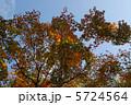 初秋 紅葉 秋の写真 5724564