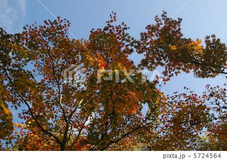 初秋の紅葉 5724564