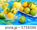 ゆず 柑橘類 柚子の写真 5738386