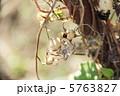 種 種子 タネの写真 5763827