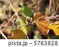 種 種子 タネの写真 5763828