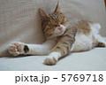 眠る お昼寝 ネコの写真 5769718