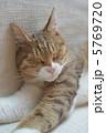 眠る お昼寝 ネコの写真 5769720