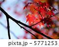 紅葉 5771253