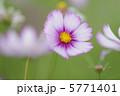 日の丸 5771401