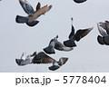 羽ばたくハト #2 5778404