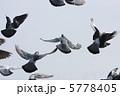 羽ばたくハト #3 5778405