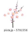 紅梅 うめ 梅の花のイラスト 5781558