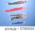 鯉のぼり 5790050