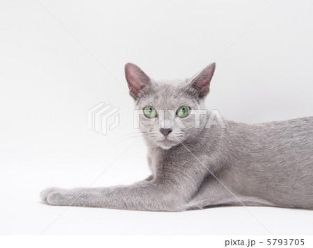 カメラを見る猫 5793705