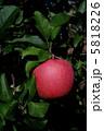 りんご フジ 葉取らずりんごの写真 5818226