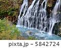 白髭の滝 白ひげの滝 しらひげの滝の写真 5842724