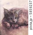 メインクーン 猫 ネコのイラスト 5859237