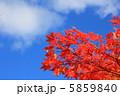 紅葉と空 5859840