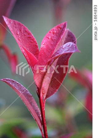 赤色の葉っぱ 5864893