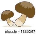 シイタケ しいたけ 椎茸のイラスト 5880267