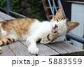 猫 ねこ ネコの写真 5883559