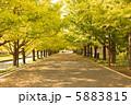 昭和記念公園のイチョウ並木 5883815
