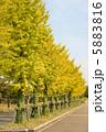 秋の景色 5883816