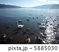 諏訪湖の湖畔にいる鴨たちと山 5885030