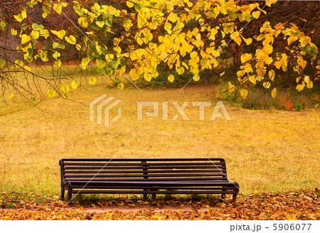 Autumn park 5906077