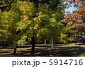 紅葉葉楓の黄葉 5914716