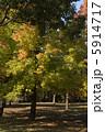 紅葉葉楓の黄葉 5914717