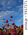 千日草の花と空 5917271