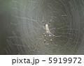 ジョロウグモ くも 生物の写真 5919972