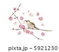 梅と鶯 5921230