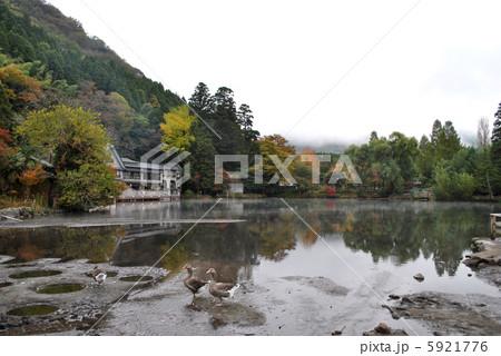 金鱗湖 5921776