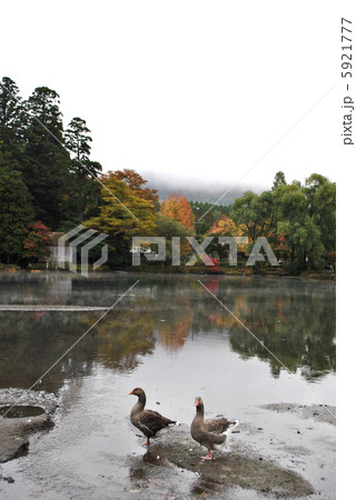 金鱗湖 5921777