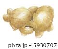 ショウガ しょうが 土生姜のイラスト 5930707