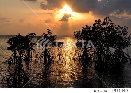 沖縄 石垣島マングローブのシルエット写真 5931440