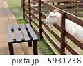 ヤギ やぎ 山羊の写真 5931738