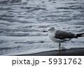 鴎 海 鳥の写真 5931762