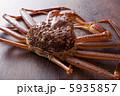 松葉蟹 5935857