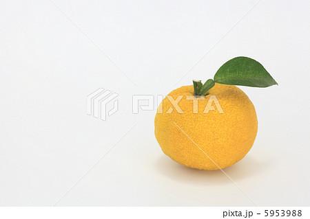 柚子 5953988
