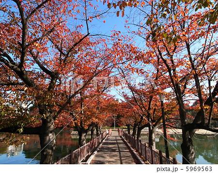 桜ノ宮公園の紅葉 大阪の紅葉スポット 5969563