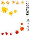 カエデ 黄葉 落葉の写真 5973904