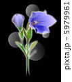 ききょう 桔梗 花のイラスト 5979961