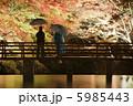 雨降りの紅葉ライトアップ 5985443