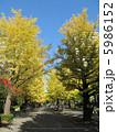 銀杏並木 光が丘の夏の雲公園 5986152