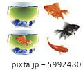 金魚 5992480
