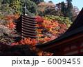 談山神社の紅葉 6009455