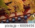 談山神社 拝殿釣燈籠と紅葉 6009456