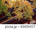 談山神社 拝殿と紅葉 6009457