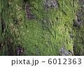 コケ こけ 苔の写真 6012363