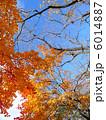 冬空 もみじ 秋の写真 6014887