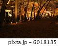 公園 もみじ 紅葉の写真 6018185